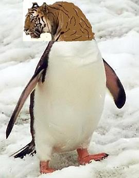 pinguinfertig